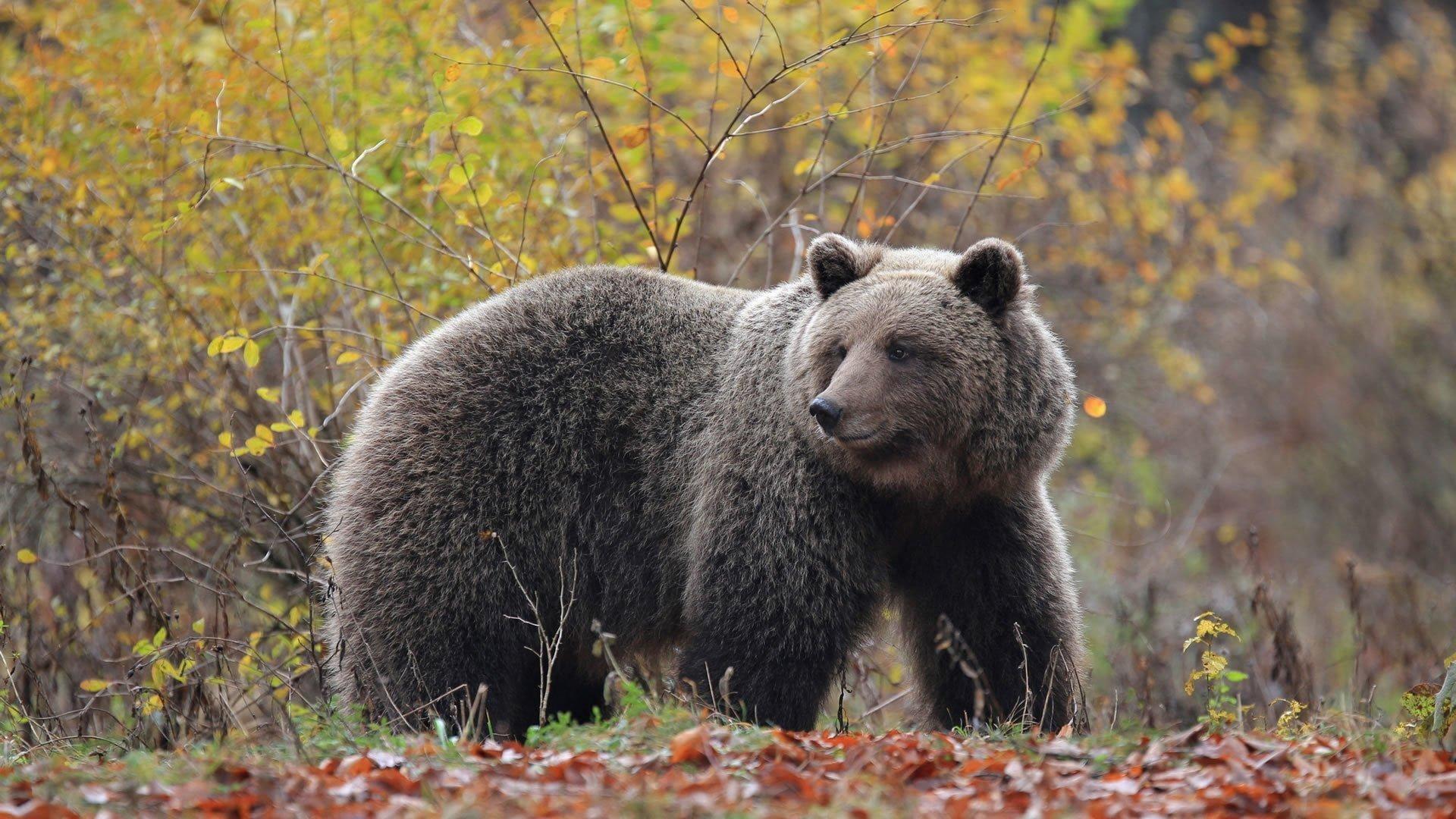 Green adventure Brown bear
